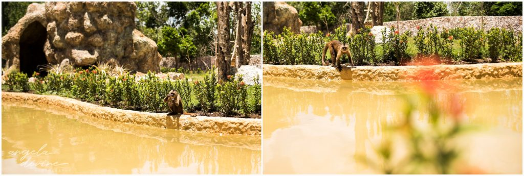 Scape Park Punta Cana monkeys