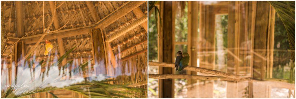 Scape Park Punta Cana love birds