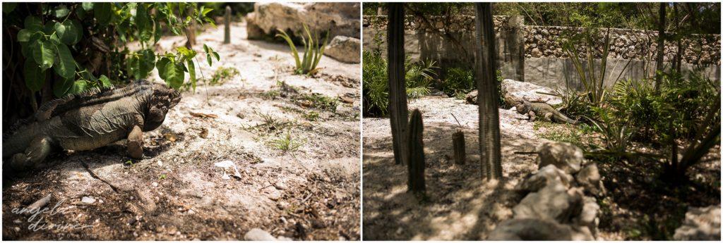 Scape Park Punta Cana Iguanas