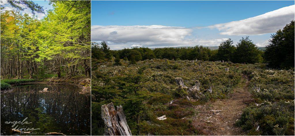 Punta Arenas forest reserve