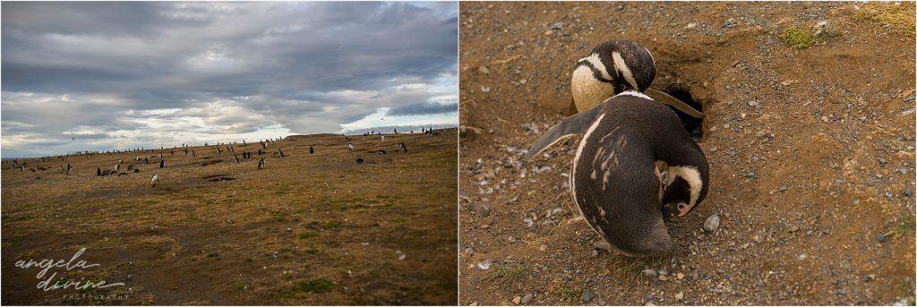 Punta Arenas Isla Magdalena penguin walk