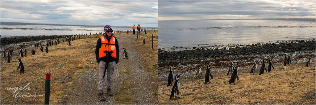 Punta Arenas Isla Magdalena penguin tours