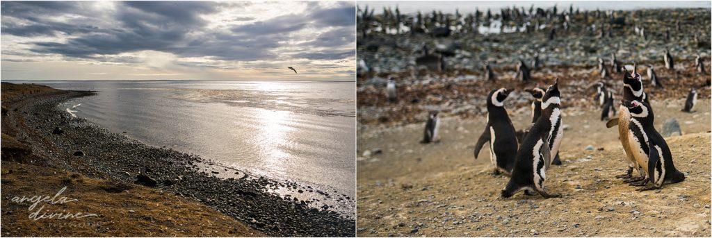 Punta Arenas Isla Magdalena penguins at sea