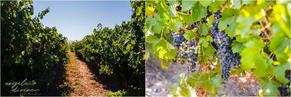 Montgras Winery