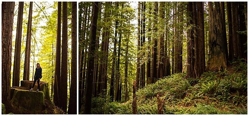 Del Norte Coast Mill Valley Trail