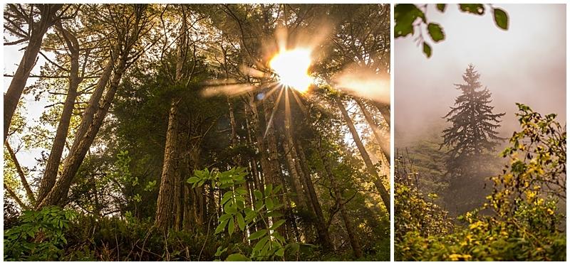 Del Norte Coast Redwood Forest