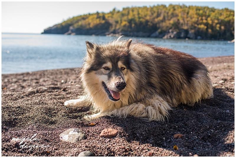 Split Rock Light House State Park is Dog Friendly